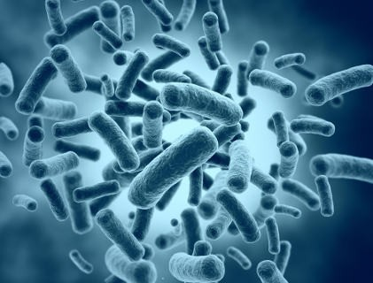 How important are probiotics for our intestine?