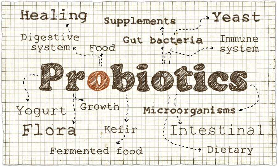 intestines and probiotics